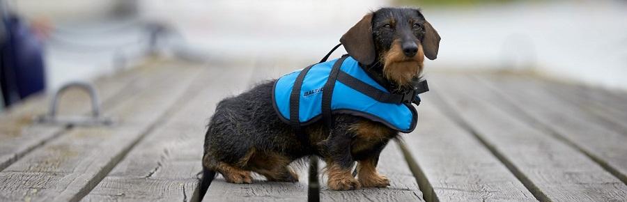 Hundeschwimmweste-Baltic-Maritimo